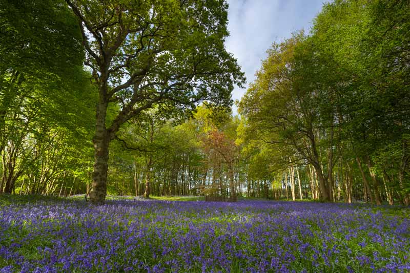 Nature and Wellbeing Treatment Kent woodland
